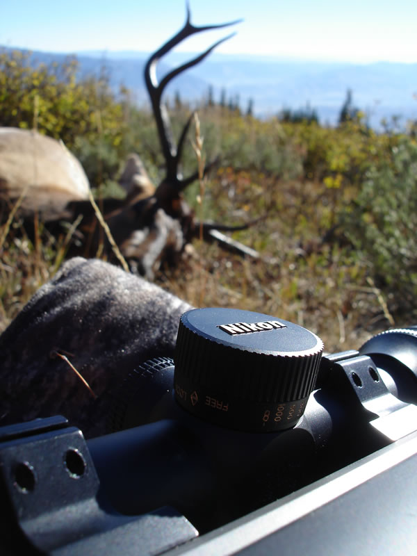 My Nikon 4-16x42SF BDC scope on my X-Bolt 270 WSM and my 2010 5x5 bull elk