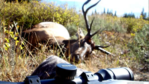 5x5 Bull Elk with Nikon and X-Bolt in 2010 Wallpaper