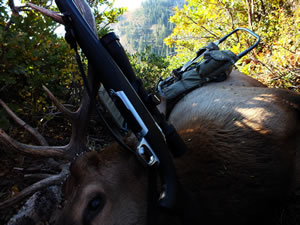 Dallen's 2012 bull elk with a X-Bolt 270 WSM and Alps Commander frame pack.