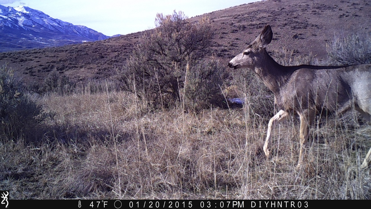 Stolen Browning Trail Camera DIYHNTER03