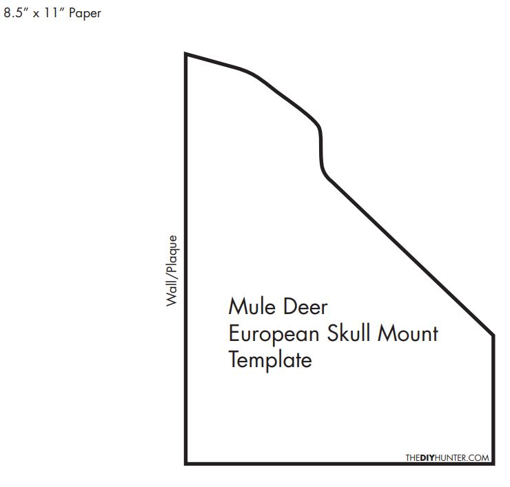 Homemade DIY Mule Deer European Skull Mount Template